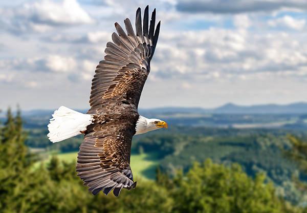 Eagle Heights Wildlife Park