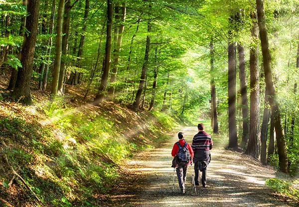 image of couple walking in woodland