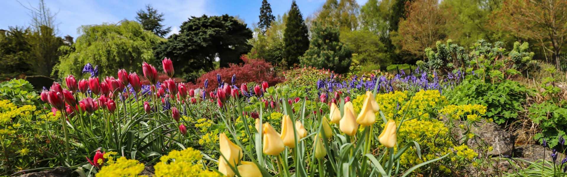 Spring flowers in bloom at Emmetts Garden