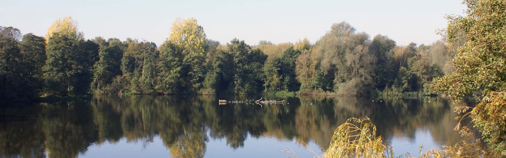 View of lake at Sevenoaks Wildlife Reserve By H W Atkins